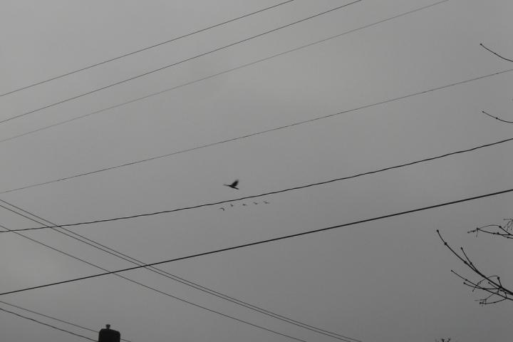 grey sky - cc photo by tiggywinkle